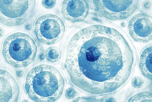Bioplacenta nhau thai sinh học
