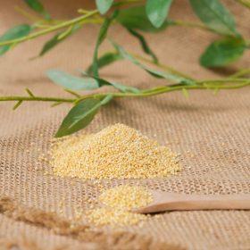 Chiết xuất mầm hạt kê