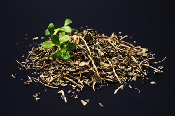 Chiết xuất rau sam được ứng dụng trong một số sản phẩm làm đẹp