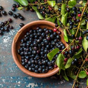 Chiết xuất quả mâm xôi Maqui Berry