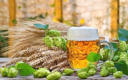 Chiết xuất men bia