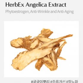 HerbEx Angelica Extract (Chiết xuất đương quy)