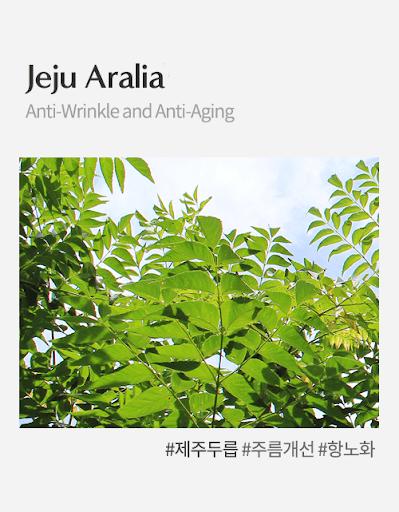 Jeju Aralia (Chiết xuất cây bạch chỉ Nhật Bản)