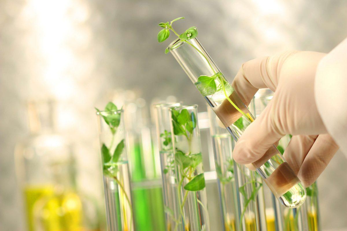 Tế bào gốc thực vật